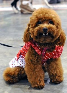 Pictures of The Cutest Dogs Ever …