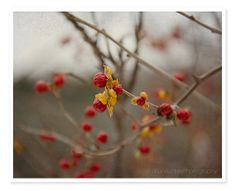 Seasonal Delights by Caroline on Etsy