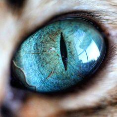 Photographer Captures the Mystical Beauty of Cat Eyes When You Zoom In Real Clos. - Photographer Captures the Mystical Beauty of Cat Eyes When You Zoom In Real Clos… – Photograph - Macro Photography Tips, Close Up Photography, Animal Photography, Photography Lighting, Photography Tattoos, Toronto Photography, Perspective Photography, Photography Backdrops, Wildlife Photography