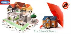 Finding a pest management service for achieving the best services of termite control and bed bugs control is also a task in Delhi/NCR. Bed Bug Control, Best Pest Control, Pest Control Services, Pest Inspection, Termite Control, Bees And Wasps, Pest Management, Humming Bird Feeders