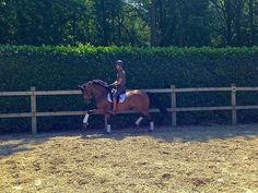 Extra picture; FOR SALE TOP KWPN mare by Wonderboy! 1.72m high born 2008 PSG level in training. Top character; of the leg and very light in the hand. Can be ridden by anyone. For more info send message to Viola.belksma@equinl.com