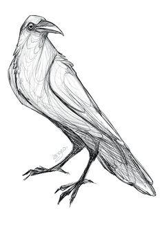 Raven Sketch: Original Art Print – Digital Illustration/ Bird/ Animal/ Gothic/ Angeo/ Drawing