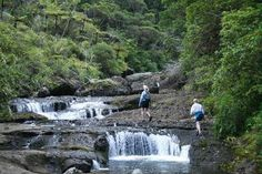 Pararaha Stream on the Buck Taylor Track, Waitakeres. For Sunday's tramp!