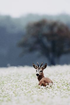Deer in a field of wildflowers. This is too cool! I would have loved to see this in person...