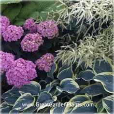 Shade Garden Combo with Hydrangeas -  think I'll try this combo in the upper garden