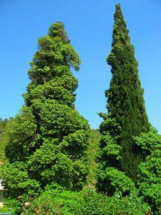 Samos, beautiful green
