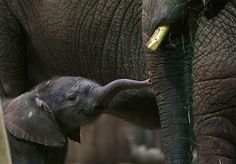 Image: African elephants (© Ina Fassbender/Reuters)