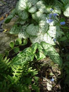 great shade plants