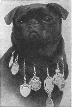 1886 prize winning pug