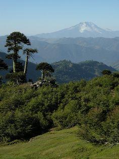Volcán Callaqui, Chile.