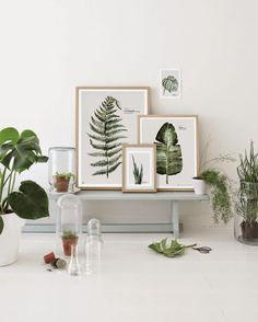 Botanical watercolor prints by Maaike Koster of My Deer Art Shop: Dutch artist Maakie Koster of My Deer Art Shop makes botanical prints of her watercolors. She specializes in stylish combinations of art and potted plants. Botanical Interior, Interior Plants, Interior And Exterior, Interior Styling, Interior Design, Turbulence Deco, Deco Boheme, Room Decor, Wall Decor