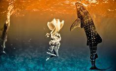 One Million Photo: Ensaio de moda com tubarões by Shawn Heinrichs & K...
