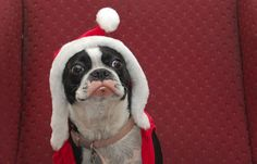 25 Traditional, Thoughtfull & Festive Photos of Christmas Time (Part1)
