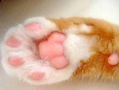 고양이 발바닥 - Pesquisa Google