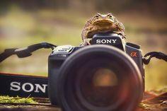 Instants insolites de la photographie d'animaux