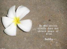 Frangipani Buddha Quote by isisdownunder1, via Flickr
