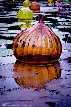 Chihuly Sculpure at Missouri Botanical Garden St. Louis by Karissa Schulten on Etsy Fine Art Print, Nature Photography, Water Lily, Chihuly, Water Reflections, Botanical, Purple and Orange, Purple, Orange, Garden Art, Glass by KarissaSchultenPhoto on Etsy