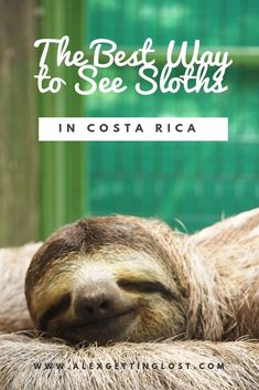 How to see sloths in Costa Rica. A day at the Sloth Sanctuary which cares for adult and baby sloths.