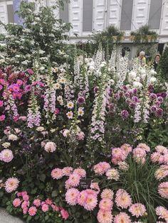 The Londoner Postcards From Chelsea Flower Show English Garden Design, Rose Garden Design, Cottage Garden Design, Cottage Garden Plants, Small Garden Design, English Flower Garden, English Gardens, Chelsea Flower Show, Peonies Garden