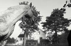 Trær og busker, landlig, hvitt hus, hest, trees, bushes, country house, white, horse Country, Artwork, House, Work Of Art, Rural Area, Auguste Rodin Artwork, Home, Artworks, Country Music