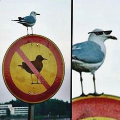 ^_^ Ríete con memes minutos mas, imagenes divertidas de animales con frases, imagenes de risa con frases bonitas, gifs laughing y memes yisus español. ➧ http://www.diverint.com/fotos-graciosas-facebook-volver-novio/