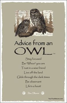 advice from a bear - Google Search