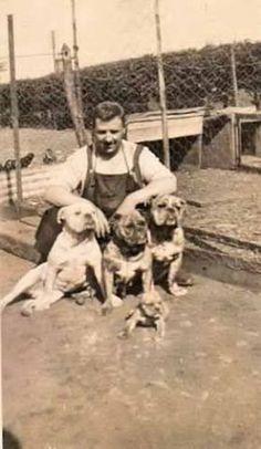 Bulldogs, Scotland, 1950.