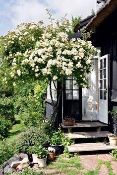 UDELIV: På en sydvendt bakke i Nordvestsjælland vokser talrige eksotiske planter og træer i en eventyrlig have, der er lige så hyggelig som det sorte træhus fra 1889, den hører til.