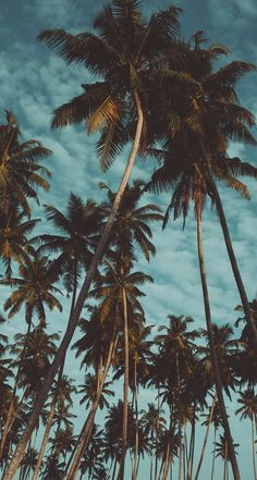 Palm Tree Wallpaper Iphone Xs Max 62 Ideas For 2019 Tumblr Wallpaper, Iphone Background Wallpaper, Tree Wallpaper, Animal Wallpaper, Nature Wallpaper, Mobile Wallpaper, Black Wallpaper, Flower Wallpaper, Wallpaper Quotes