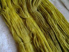 Rhubarbe feuille colorant naturel sur la laine.