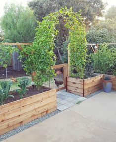 The current state of the patio garden a sight for sore eyes; a sight we've been waiting on since first dreaming up the backyardgardenreno the passionfruit vines filled in and have finally met one is part of Garden vines - Veg Garden, Garden Cottage, Vegetables Garden, Vegetable Gardening, Raised Vegetable Gardens, Raised Herb Garden, Garden Boxes, Raised Patio, Veggie Gardens
