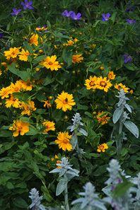 Az évelőágyások kialakításának szempontjai - Botanikaland.hu Gardening, Plants, Creative, Lawn And Garden, Urban Homesteading, Horticulture