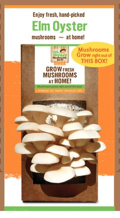 Grow your own elm oyster mushrooms at home with our easy-to-use mushroom box! 100th Monkey Mushroom Farm Elm Oyster Mushroom Box for sale online for $22.