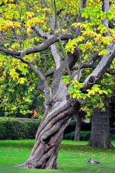 Regent s Park, London, England colour photograph picture print by AE Photo