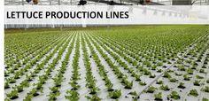 Cultivation Gutter - Lettuce production #Codema