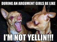 Funny chihuahua meme! Girls be like..