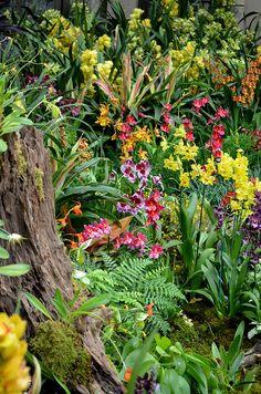 Winter Escape - Orchid Extravaganza @ Longwood Gardens! Orchids Garden, Garden Plants, Longwood Gardens, Garden Inspiration, Garden Ideas, Landscape Architecture Design, Lean To, Exotic, Tropical