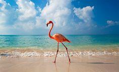 """Elegance of Flamingo"" by Ian Cumming"