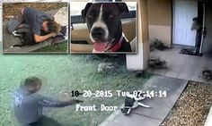 Horrifying moment Florida cop shot dead beloved dog Duchess in front of her owner \'on routine house check\' WARNING GRAPHIC IMAGES  A Florida cop shot Duchess, a 40-pound bull terrier mix, on Tuesday The pet ran out of it\'s owner\'s front door after the officer knocked to say a car door had been left open  Duchess\'s owner Gillian Palacios said the dog was not aggressive in any way and wasn\'t even barking The cop has been placed on administrative leave during an investigation  Florida…