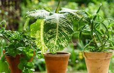 10 «Βολικά» Φυτά που δεν χρειάζονται πολύ νερό για να επιβιώσουν! - Toftiaxa.gr Belle Plante, Kraut, Native Plants, Organic Gardening, Shrubs, Perennials, Plant Leaves, Flora, This Is Us