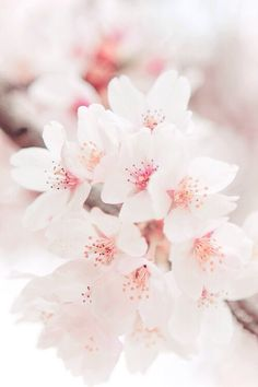 Image via We Heart It https://weheartit.com/entry/145587159/via/4936365 #background #flowers #iphone #wallpaper #ios #iphone6