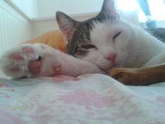 Flo Katze | Pawshake