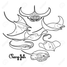 54825105-Graphic-cramp-fish-collection-drawn-in-line-art-style-Vector-electric-Manta-ray-isolated-on-white-ba-Stock-Vector.jpg (1300×1300)