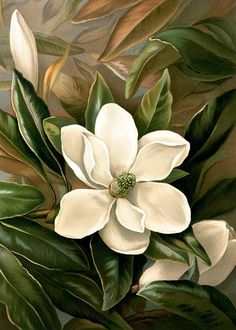 Magnolia grandiflora by Ellen Thayer Fisher Chromolithograph published by Louis Prang & Co. Magnolia Paint, Magnolia Flower, Magnolia Pictures, Illustration Blume, Botanical Prints, Painting Inspiration, Flower Art, Painting & Drawing, Abstract