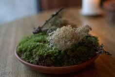 Reindeer moss, the pinnacle of preciousness, Noma, Plate by Plate - Roads & Kingdoms