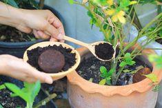 10 Genius Ways To Use Old Coffee Grounds In Your Garden Organic Gardening, Gardening Tips, Container Gardening, Urban Gardening, Hydroponic Gardening, Organic Mulch, Aquaponics, Rustic Outdoor Decor, Acid Loving Plants