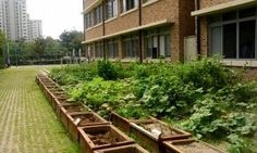 What Is A School Garden: How To Start A Garden At School -  Not only do school gardens teach children about the importance of environmental stewardship, but they are also beneficial for experiential learning in a number of disciplines. Read more here.