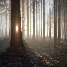 mariko_klug instagram Forest Trail, Photography Illustration, Bpd, Leaf Flowers, Morning Light, Life Is Beautiful, Wilderness, Woodland, Witch