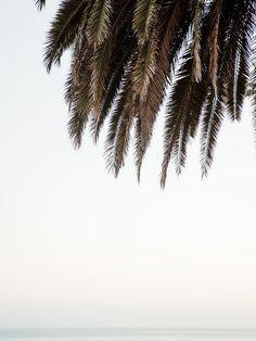 Santa Barbara - Cereal