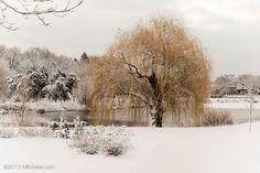 Winter Willow | Minneapolis Photography Photo Blog